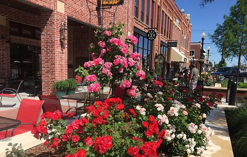 How the Roses Were Brought Back to Broken Arrow