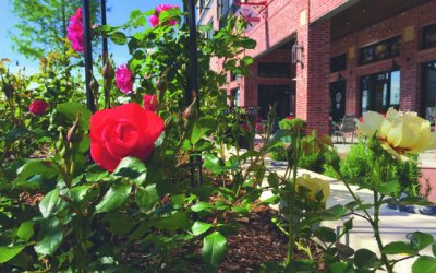 Creating The Rose District…Click here for full article