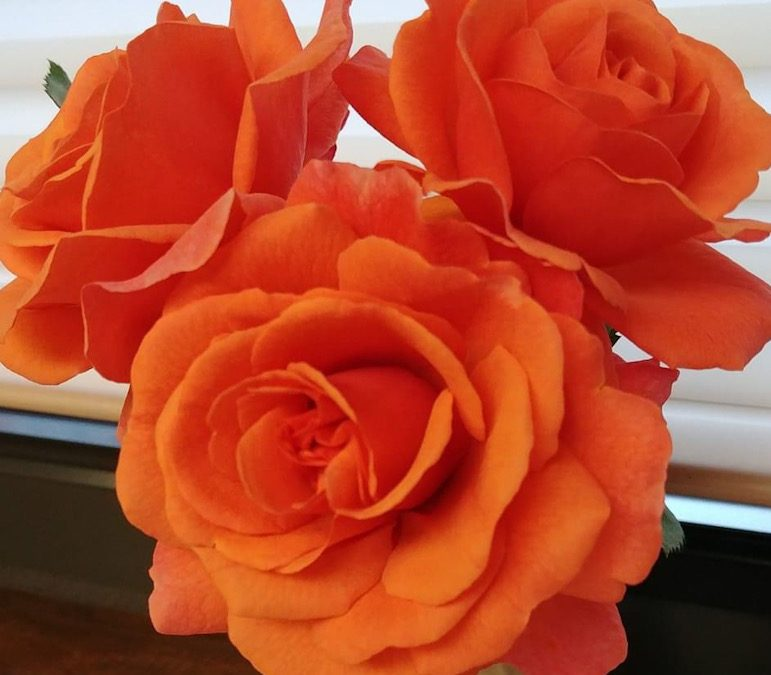 October Rose Care