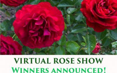 Virtual Rose Show Winners!