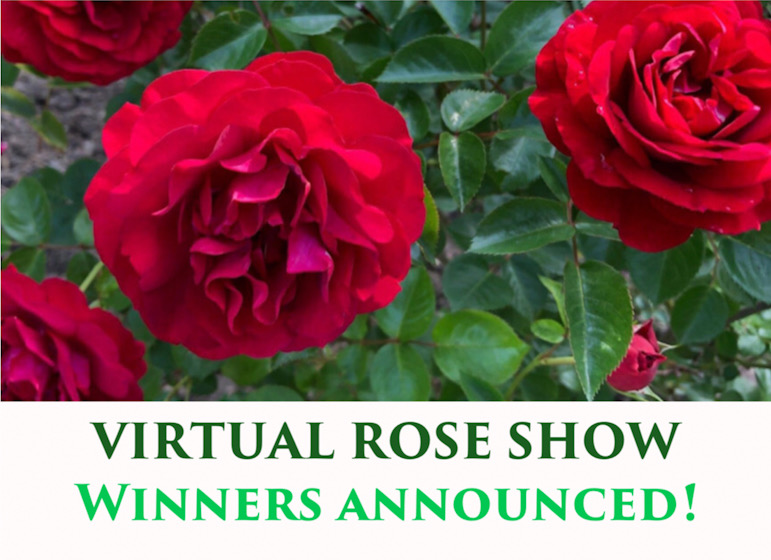 Virtual Rose Show Winners!