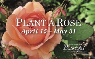 Plant a Rose Event
