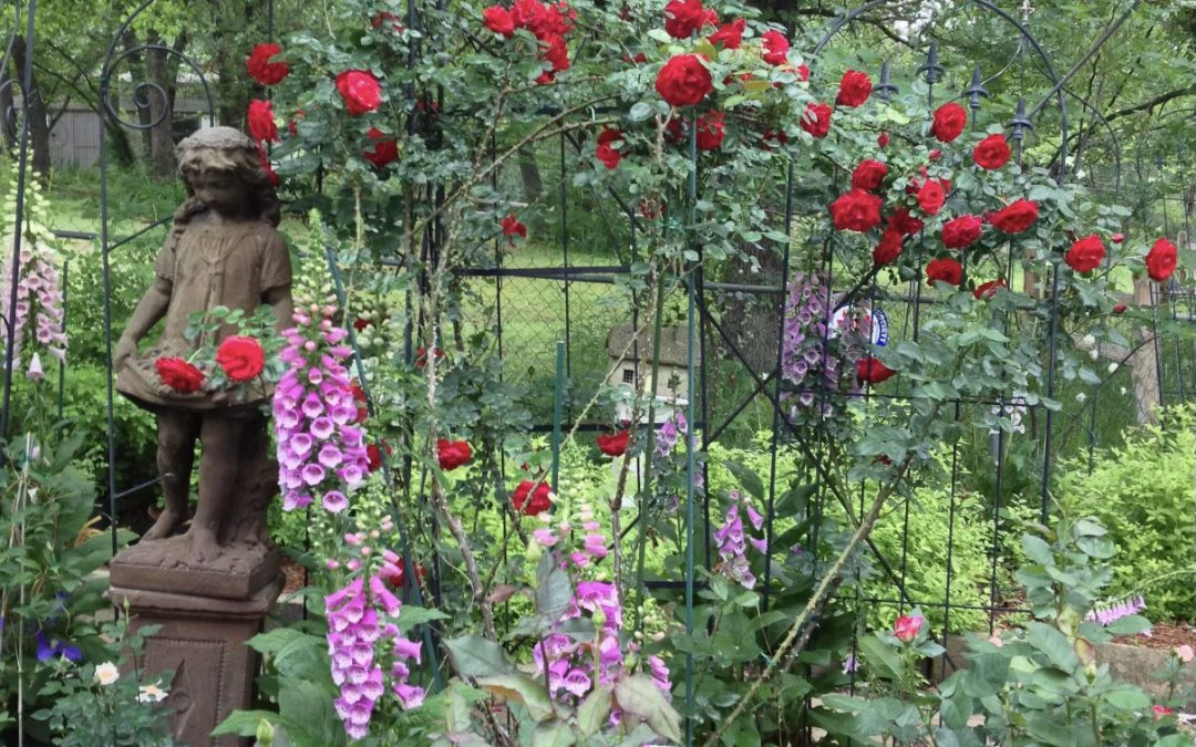 March Rose Care Pruning and Soil