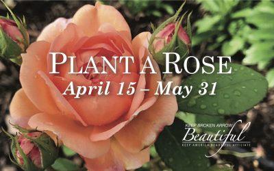 Plant a Rose