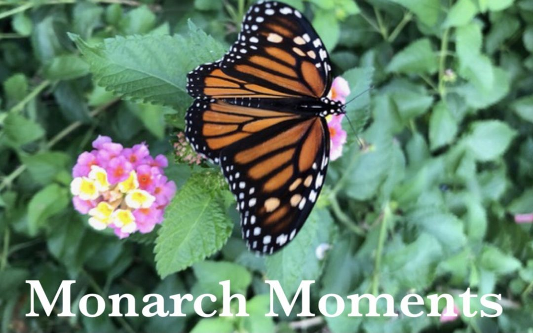Monarch Moments