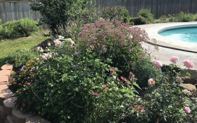 Grand Summer Garden!